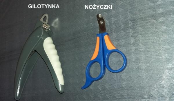 nożyczki i gilotynka do kocich pazurków
